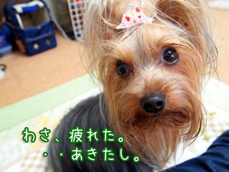 4_20100314161455.jpg