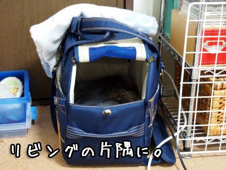 4_20100318191157.jpg