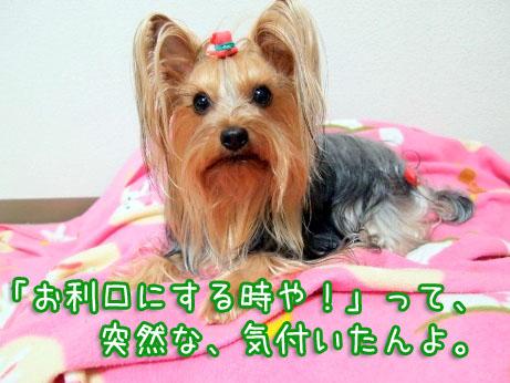 4_20100324120048.jpg