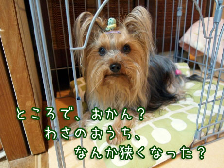 4_20100415204055.jpg
