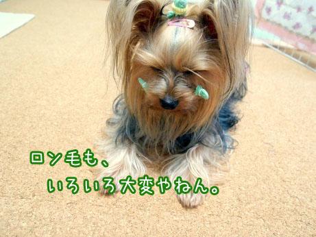 4_20100418185900.jpg
