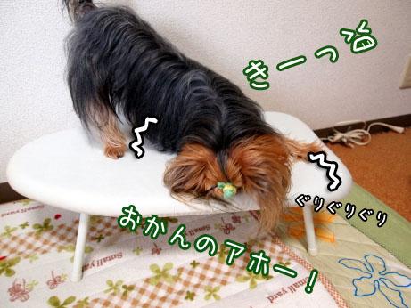 4_20100419180539.jpg