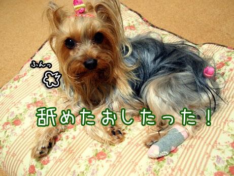 4_20100427194250.jpg