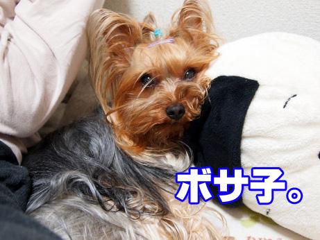 4_20100511191438.jpg