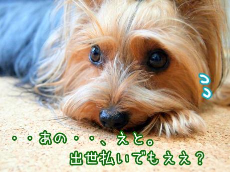 4_20100513184421.jpg