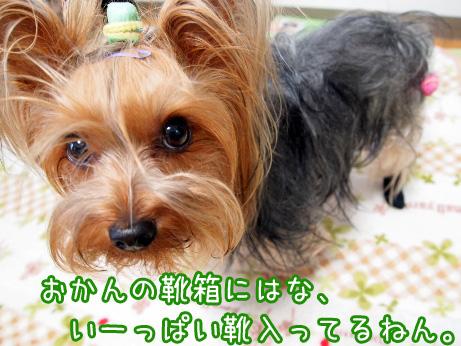 4_20100514193757.jpg