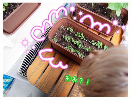 4_20100522182952.jpg