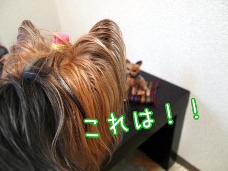 4_20100529203155.jpg
