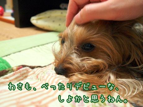 4_20100531193037.jpg