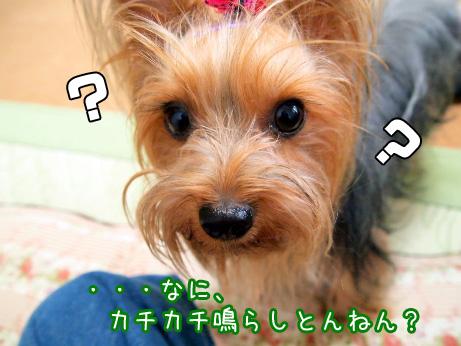 4_20100607171652.jpg