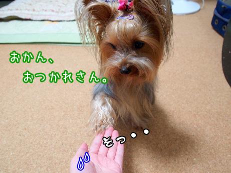 4_20100608181101.jpg