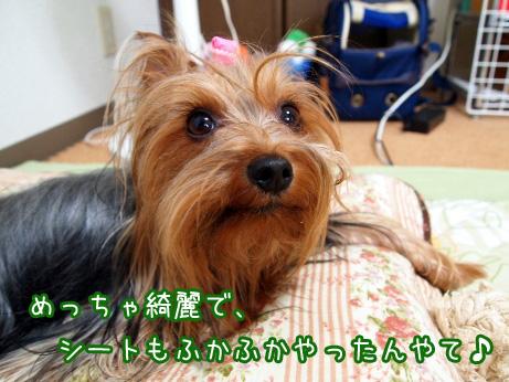 4_20100609154915.jpg