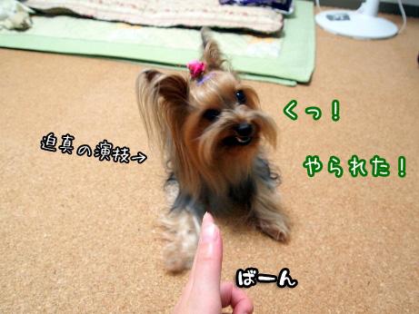 4_20100611185718.jpg
