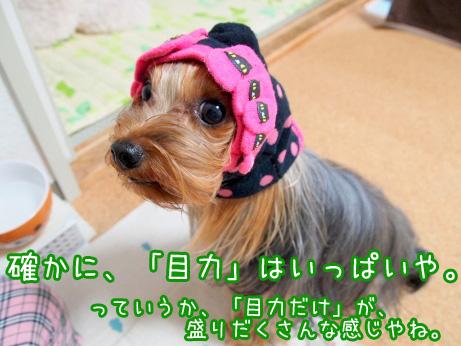 4_20100623194640.jpg