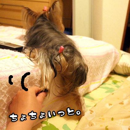 4_20100630153437.jpg