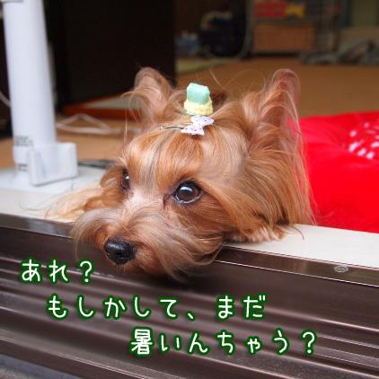 4_20100708155616.jpg