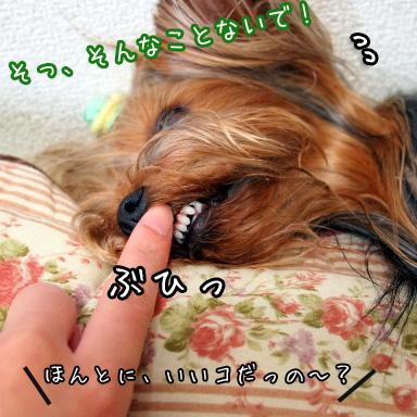 4_20100721164617.jpg