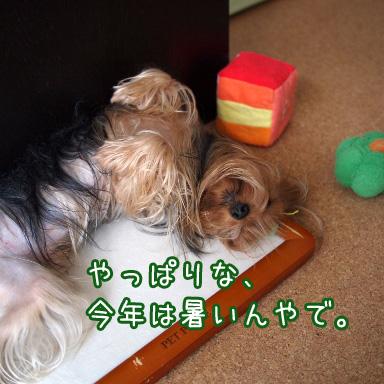 4_20100725190943.jpg