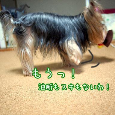 4_20100801194139.jpg