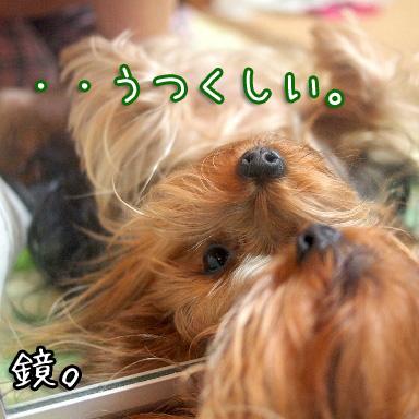 4_20100807191619.jpg