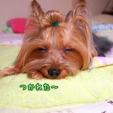 4_20100811190839.jpg