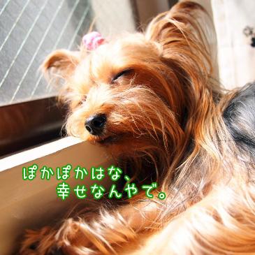 4_20100822191518.jpg
