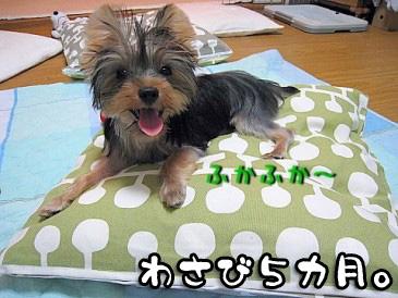 4_20100827205936.jpg