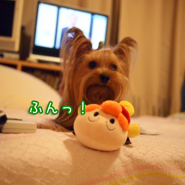 4_20100902170558.jpg