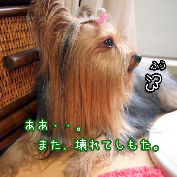 4_20100915192043.jpg