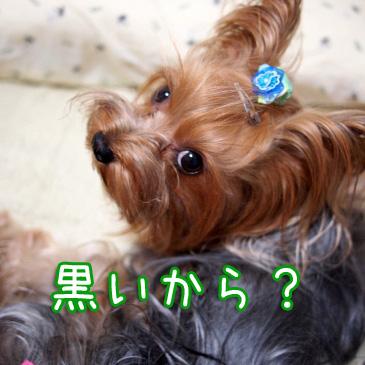 4_20101013200735.jpg
