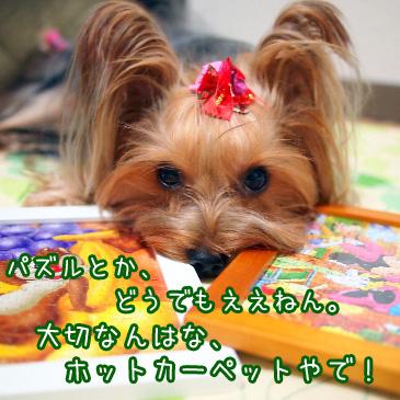4_20101029191320.jpg