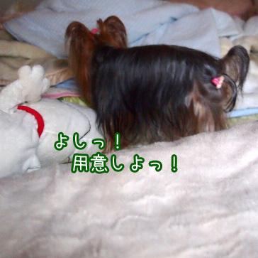4_20101107183922.jpg