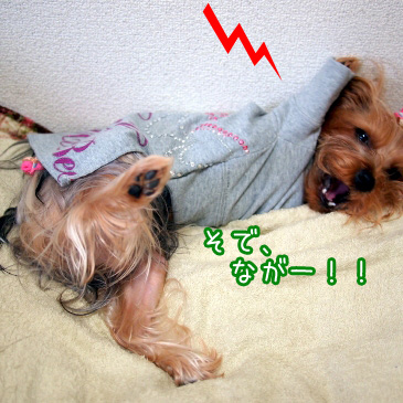 4_20101108164020.jpg