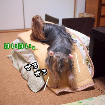 4_20101114190717.jpg