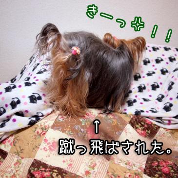 4_20101116185115.jpg