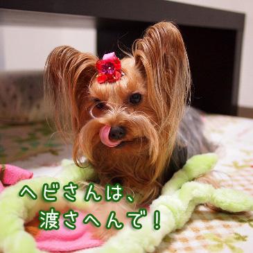 4_20101118190914.jpg