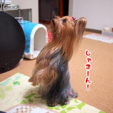 4_20101203174117.jpg