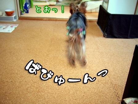 4_20101209192943.jpg
