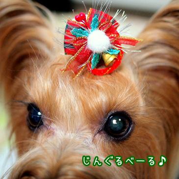 4_20101210194507.jpg