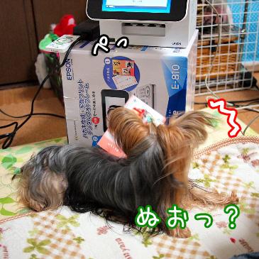 4_20101212202310.jpg