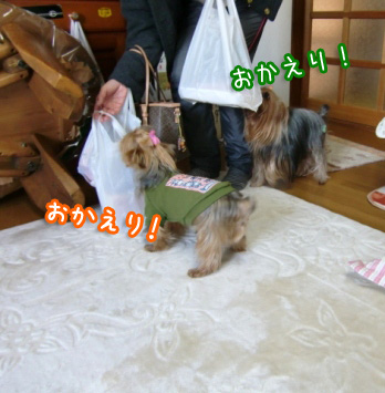 4_20101228150950.jpg