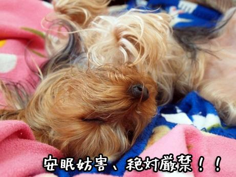 5_20100215194209.jpg