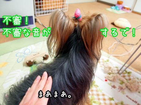 5_20100219175354.jpg