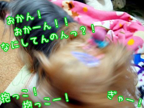 5_20100220202010.jpg