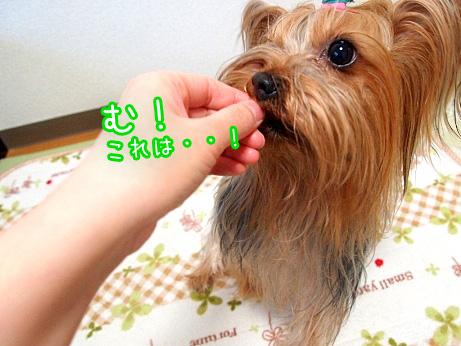 5_20100224170528.jpg