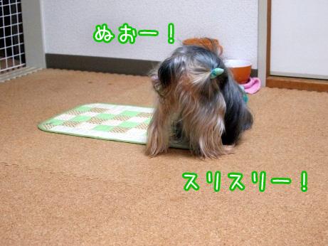 5_20100227192559.jpg