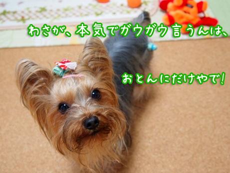 5_20100304174533.jpg