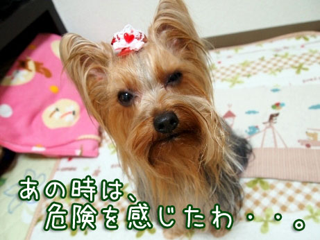 5_20100310182708.jpg
