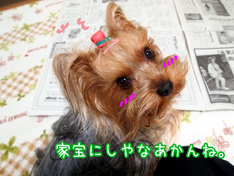 5_20100317095819.jpg