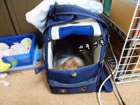 5_20100318191157.jpg